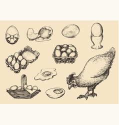Graphic poultry farm goods in vector