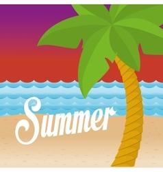 summer palms tree vector image