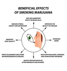 Useful properties smoking cannabis cannabis vector