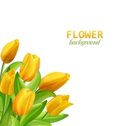 Set of banners with colorful flower vector image