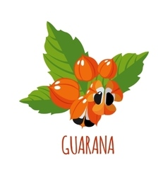 Guarana icon in flat style on white background vector