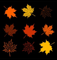 Leaves of maple tree collection vector