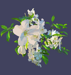painted white flowers of a blossoming apple tree vector image