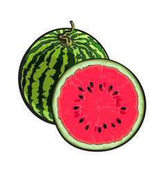 whole striped watermelon and cut in half sketch vector image