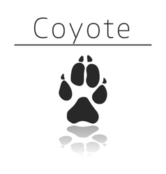 Coyote animal track vector image vector image