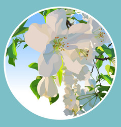 white flowers of a blossoming apple tree in a vector image