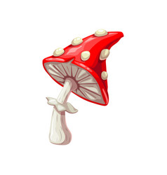 Fly-agaric isolated amanita fungi vector