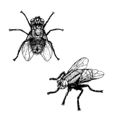 Hand drawn sketch fly vector