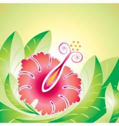 hibiscus flower vector image