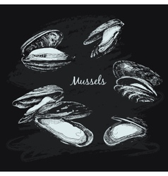 Mussels vector image
