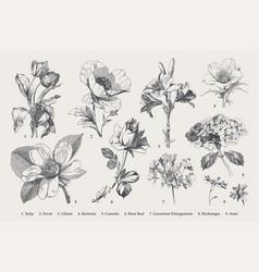 Vintage botanical set autumn flowers black vector