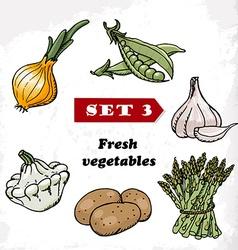 Set 3 Fresh vegetables of onions garlic squash vector image vector image
