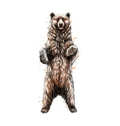 brown bear standing on his hind legs from a splash vector image