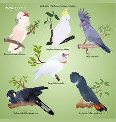 Collection of different types of realistic parrot vector