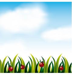 garden flowers and grass field vector image