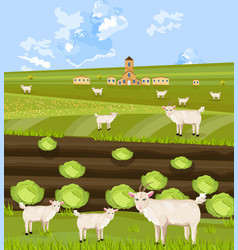 goats at the farm green summer backgrounds vector image