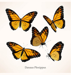 Monarch art in several different views vector