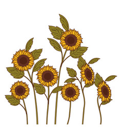 Pattern sunflowers isolated icon vector