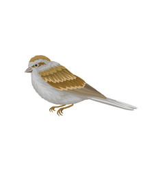 Small winter bird with gray-brown plumage side vector