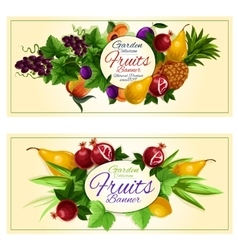Sweet summer fruits banners for food design vector