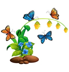 Butterflies flying around the plant vector image vector image