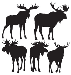 Elks silhouette vector