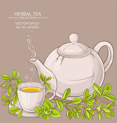 cup of marjoram tea and teapot vector image