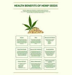 Health benefits hemp seeds vertical infographic vector