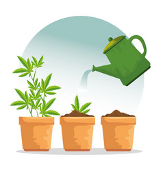Nature cannabis plant in plantpot and watering vector