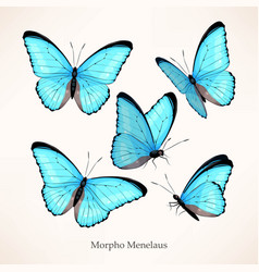 Set morpho in five different views vector
