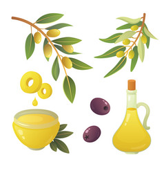 Set olives fruit olive oil bottle branch tree vector