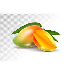 two fresh realistic mango fruit on a transparent vector image