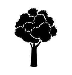 black tree silhouette foliage branch ecology image vector image
