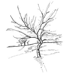 hand drawn tree isolated on white background vector image