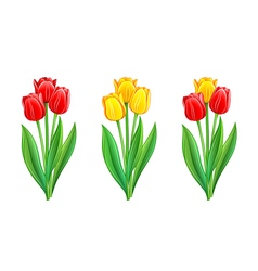 Bouquets of red and yellow tulips vector image vector image