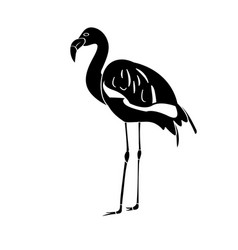 isolated flamingo silhouette vector image vector image