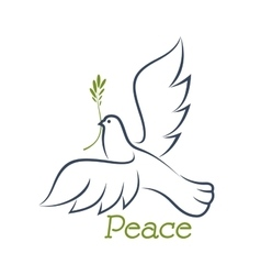 dove peace with green olive vector image