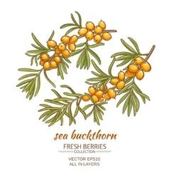 Sea buckthorn vector
