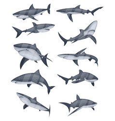 Set of shark icons vector