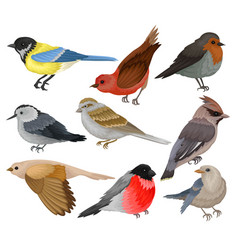 Set of winter birds wildlife and fauna theme vector