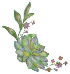 drawn watercolor succulent flower vector image