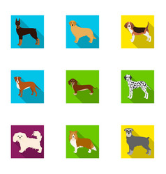 animal domestic dachshund and other web icon in vector image vector image