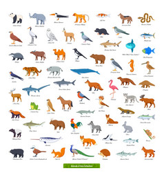 animals asia collection vector image