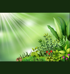 botanical plant view on sun light vector image