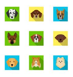 doberman dalmatian dachshund spitz stafford vector image
