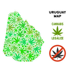 Royalty free marijuana leaves composition uruguay vector