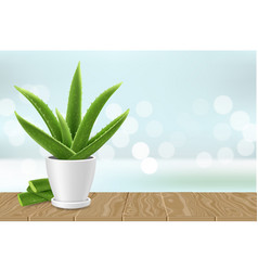 Aloe vera plant in pot poster banner vector