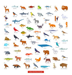 animals north america collection vector image