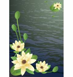 Blossoming lilies vector