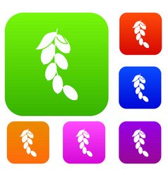 Branch of cornel or dogwood berries set color vector